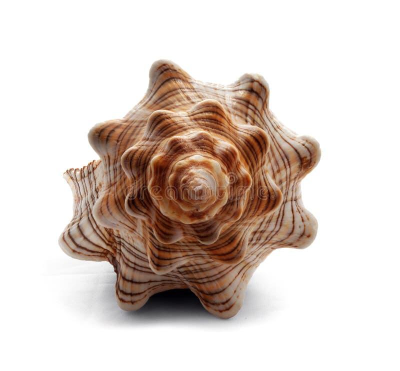 Seashell. Stock Photos