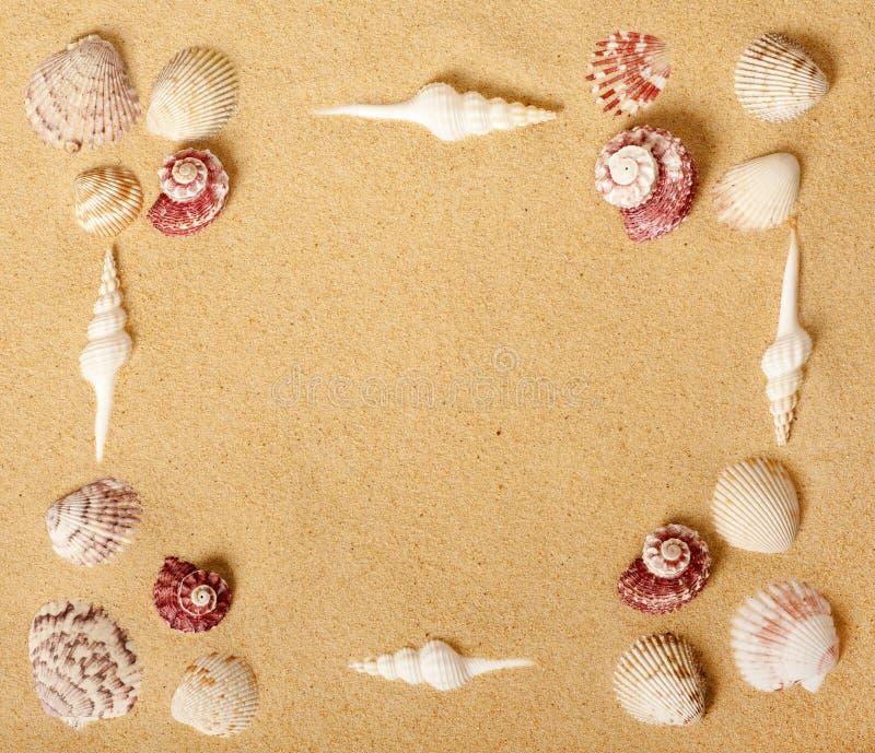 Seashell-Bilderrahmen stockfotografie
