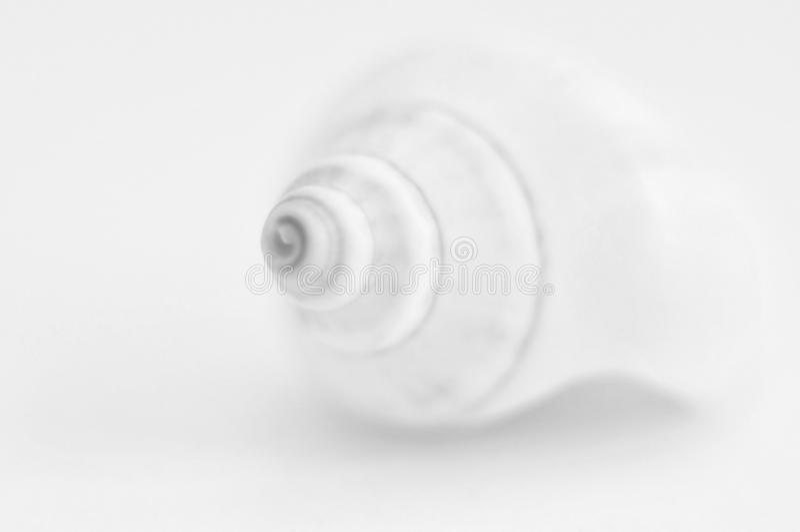Seashell black and white stock image