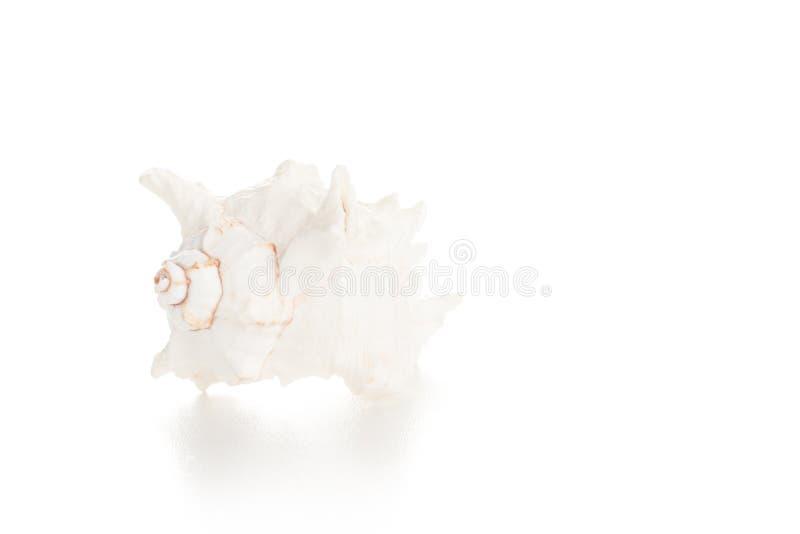 Seashell blanc photos stock
