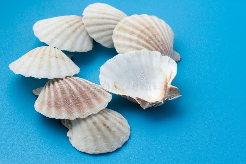 Seashell blanco en azul imagen de archivo