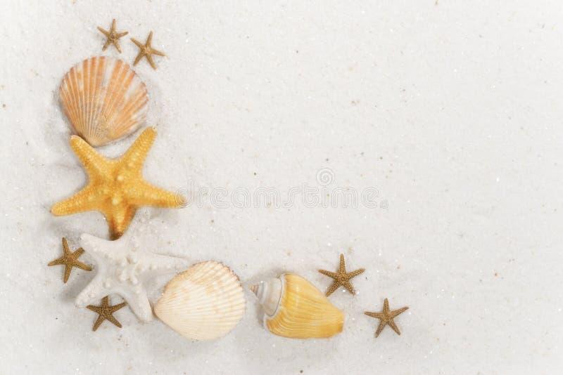 Seashell Border royalty free stock image