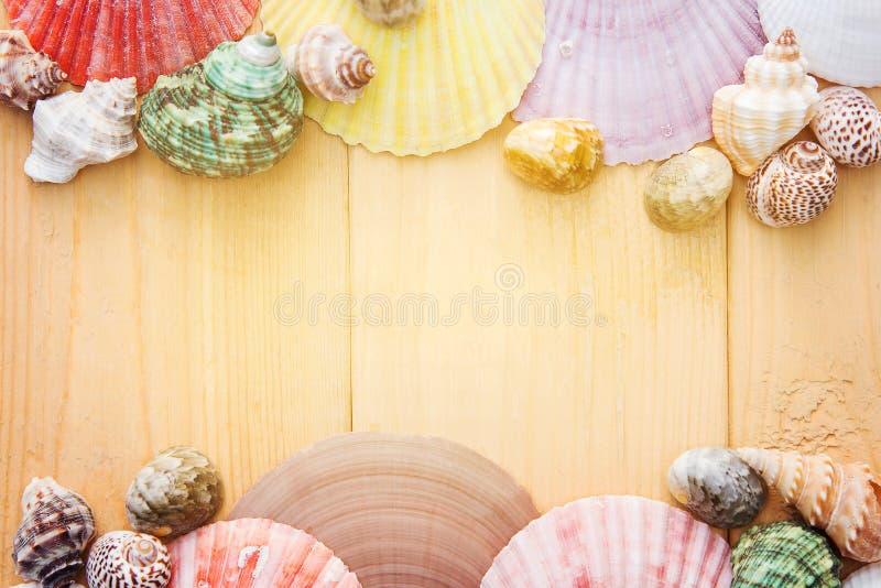 Seashell border on wooden planks stock image