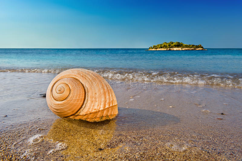 Seashell on calm Mediterranean beach. Seashell on a sandy beach in the Mediterranean, washed by sea surfs royalty free stock photography