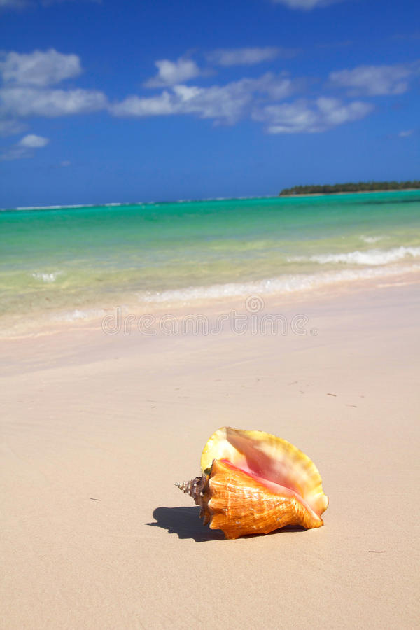 Download Seashell on caribbean sea stock image. Image of nautical - 17507243