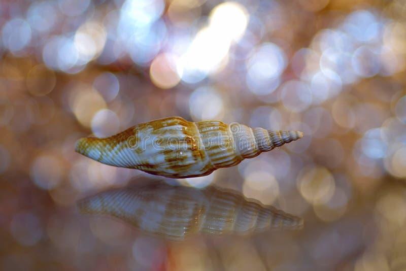 Seashell, Close Up, Macro Photography, Fauna stock images