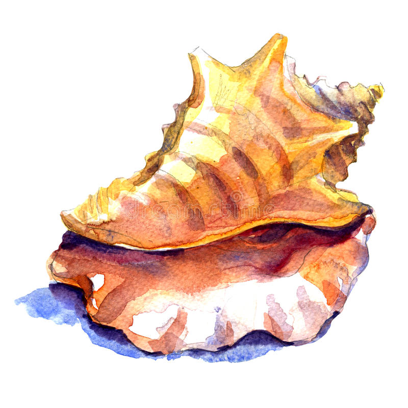 Seashell in close-up on a white royalty free illustration