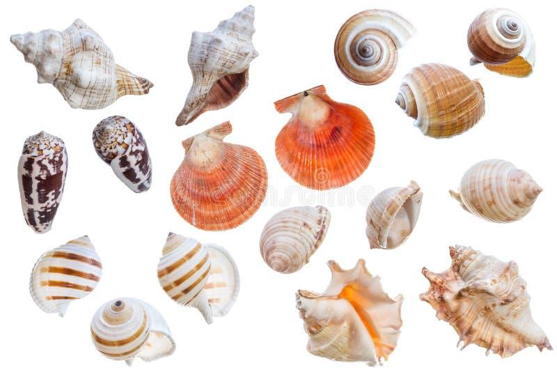 Seashell collection stock image