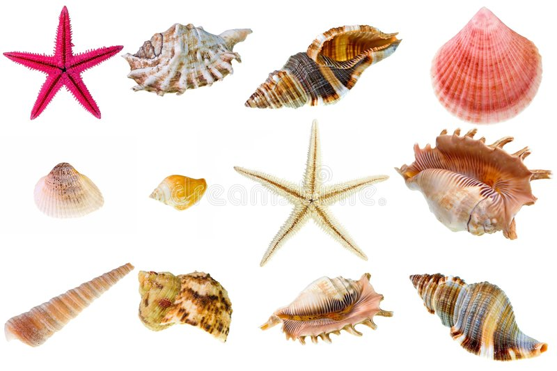 Download Seashell collection stock photo. Image of life, curve - 7847954