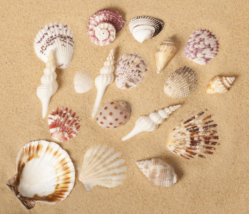 Seashell Collection Design royalty free stock photography