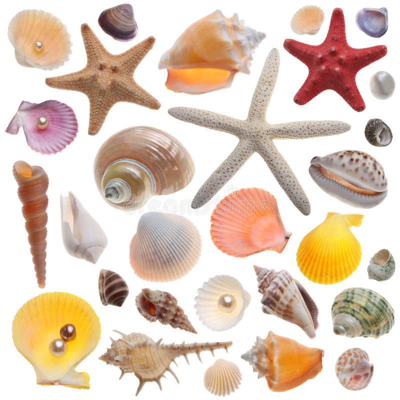 Seashell collection isolated. On the white royalty free stock photos