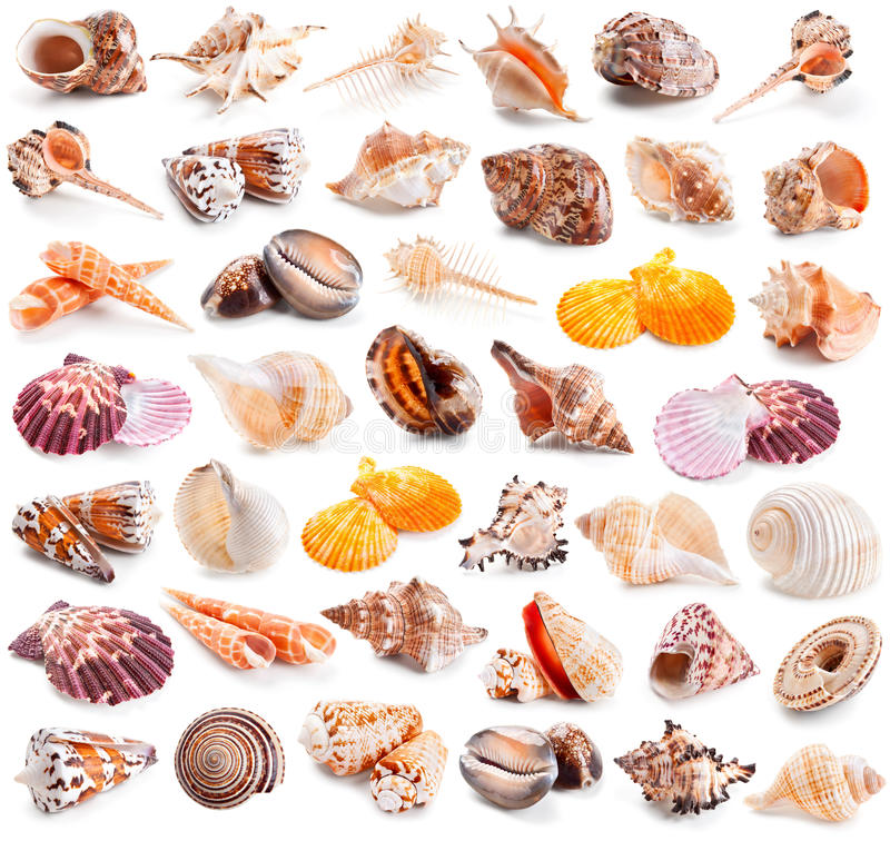 Seashell collection isolated on a white stock images
