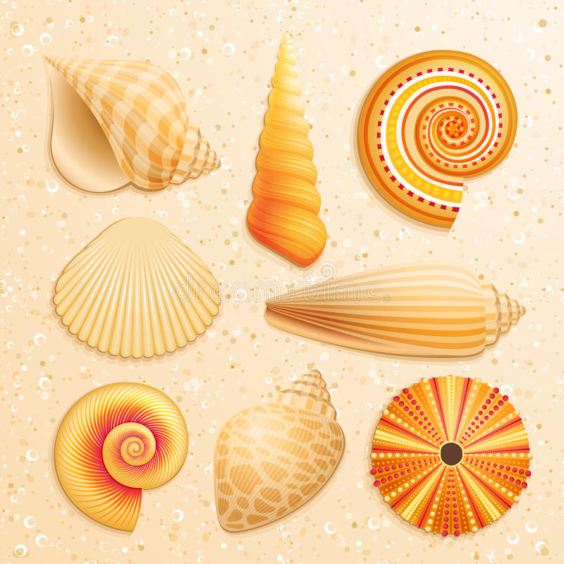 Seashell collection on sand background. Vector illustration royalty free illustration