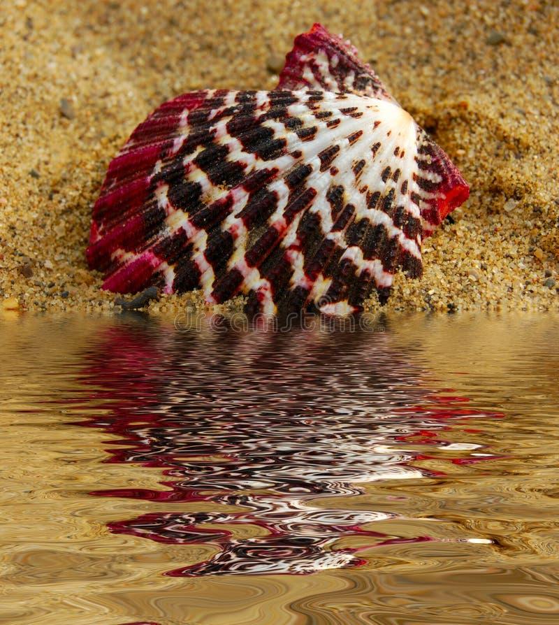 Seashell coloré images libres de droits