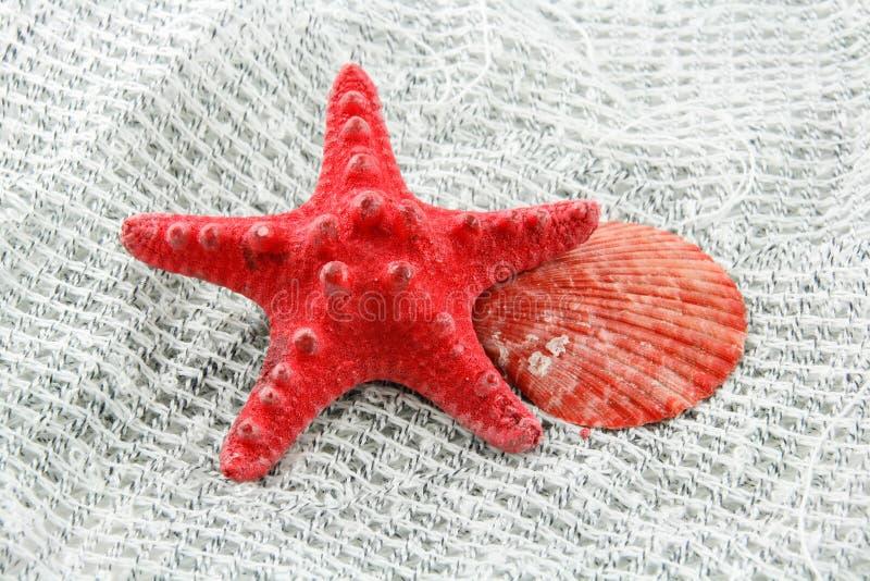 Seashell coloreado en una red de pesca imagen de archivo