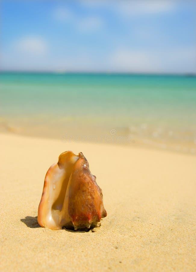 Seashell com fundo borrado imagem de stock