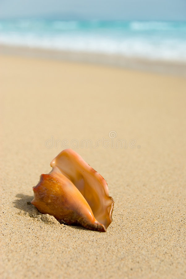 Seashell con el fondo enmascarado fotografía de archivo