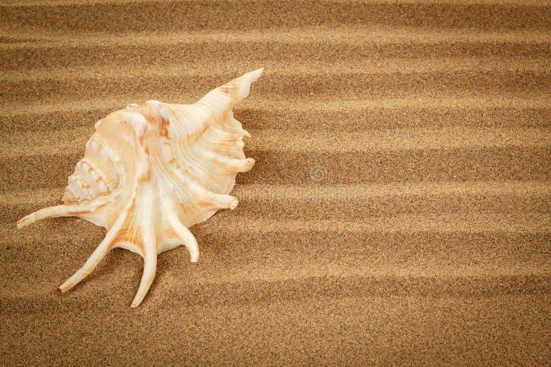 Seashell con la arena como fondo fotografía de archivo