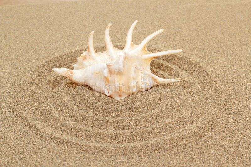 Seashell con la arena como fondo imagen de archivo libre de regalías
