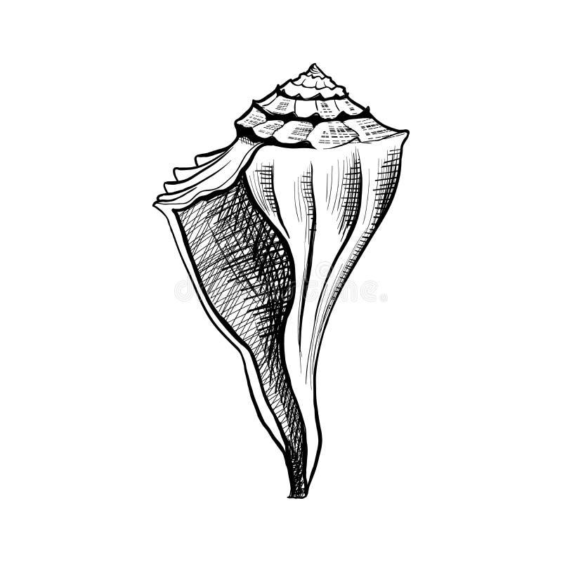 Seashell, conch hand drawn vector. Seashell, mollusk hand drawn vector illustration. Freehand outline conch engraving. Dog head triton monochrome sketch. Marine royalty free illustration