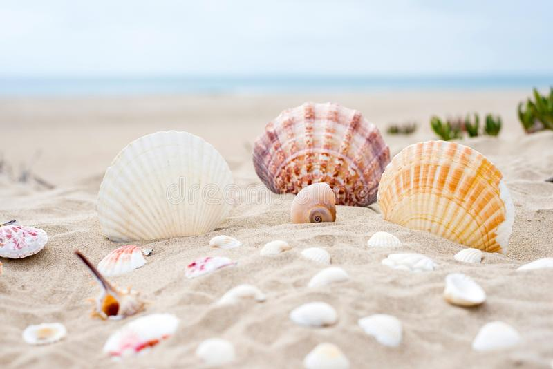Seashell, Conchology, Sand, Cockle stock photography