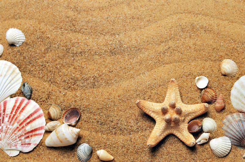 Seashell, Conchology, Sand, Material royalty free stock images