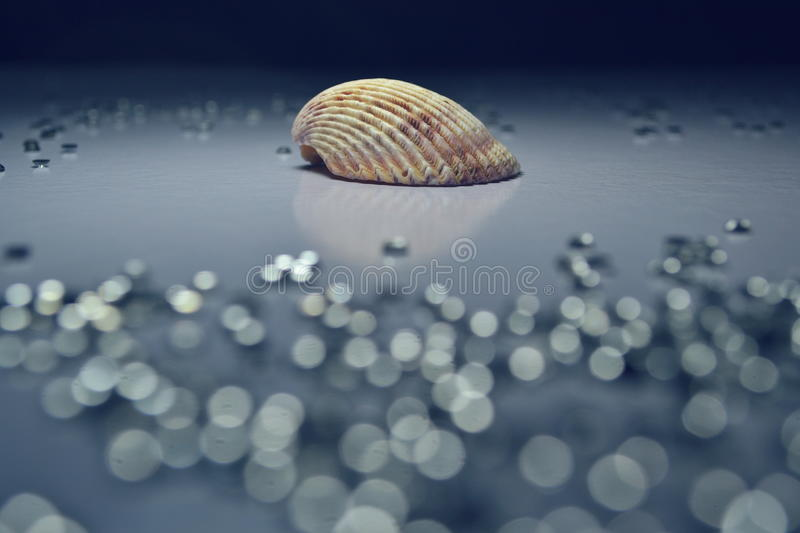 Seashell with Crystal Bokeh - Blue Tone royalty free stock images
