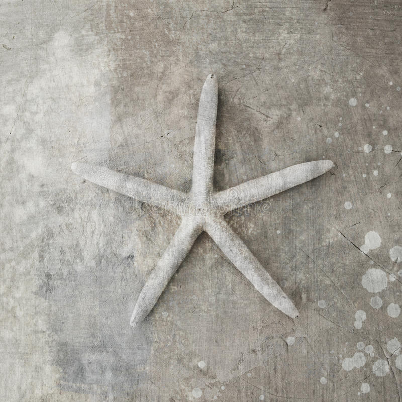 Seashell d'étoiles de mer images libres de droits