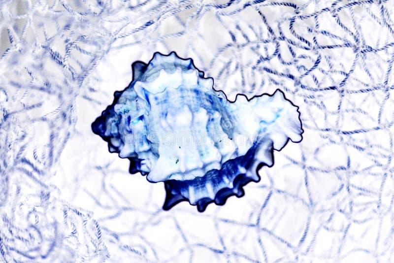 Seashell Dans Le Réseau Photographie stock