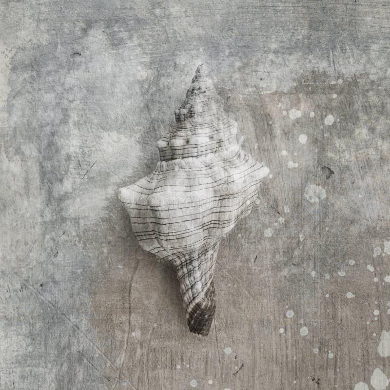 Seashell de conque illustration libre de droits