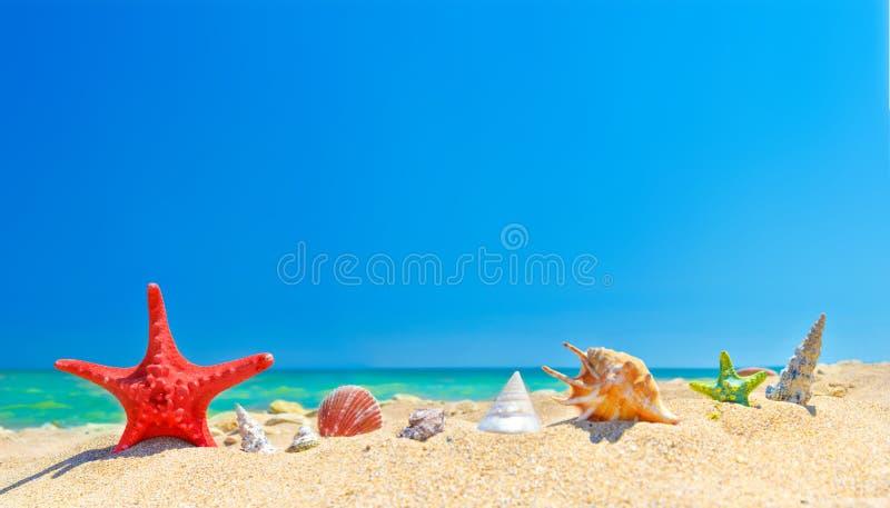 Seashell de feston sur le rose photos stock