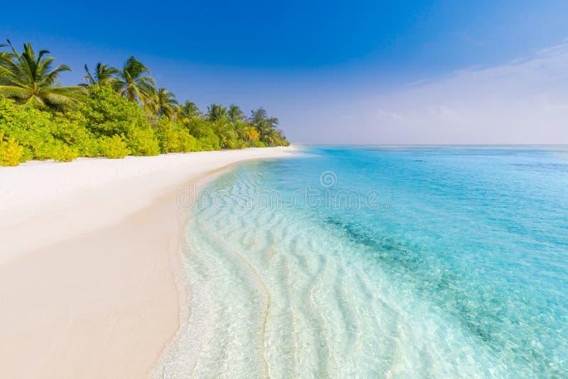 Seashell de feston sur le rose Bel horizontal de plage Scène tropicale de nature Palmiers et ciel bleu Vacances d'été et concept  photo libre de droits