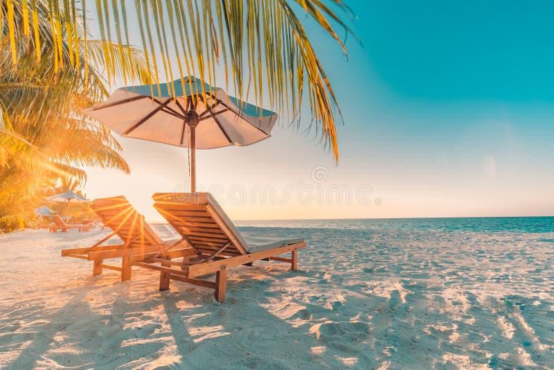 Seashell de la concha de peregrino en color de rosa Paisaje hermoso de la playa Escena tropical de la naturaleza Palmeras y cielo fotografía de archivo libre de regalías