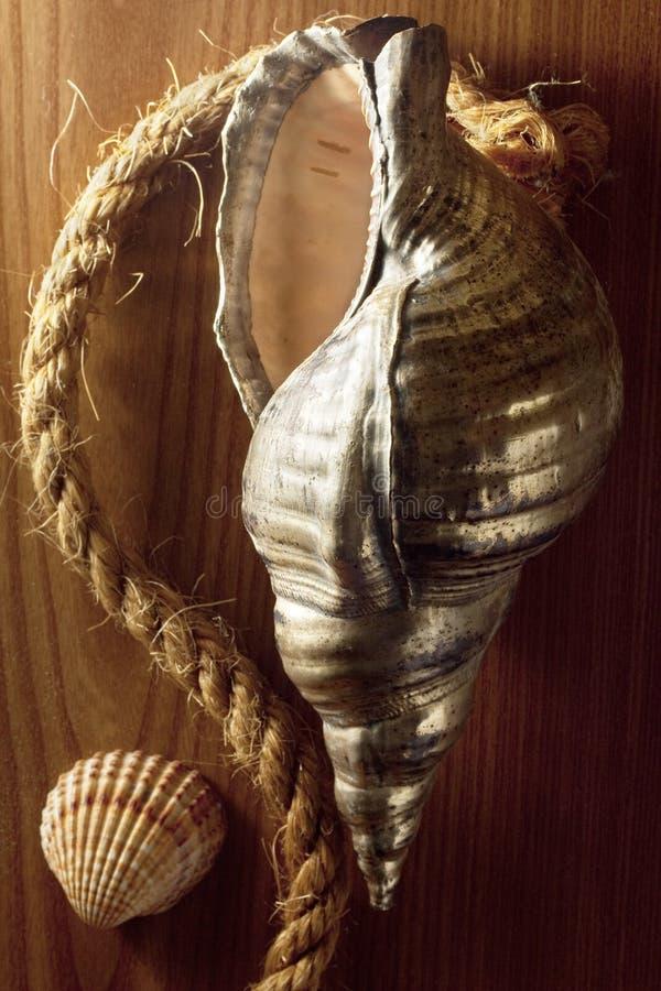 Seashell de plata con la cuerda imagen de archivo libre de regalías