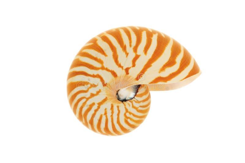 Seashell del Nautilus fotografia stock libera da diritti