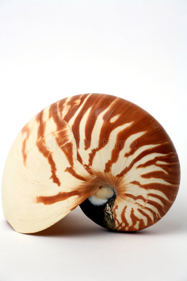 Seashell del Nautilus fotografia stock