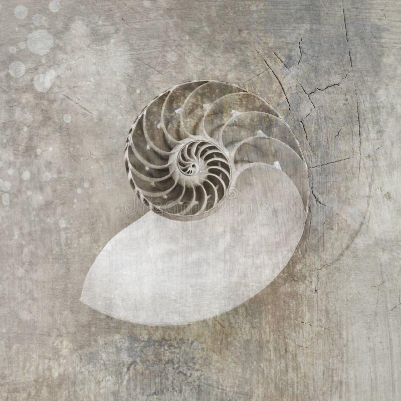 Seashell del nautilus ilustración del vector