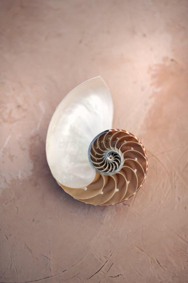 Seashell del Nautilus immagine stock