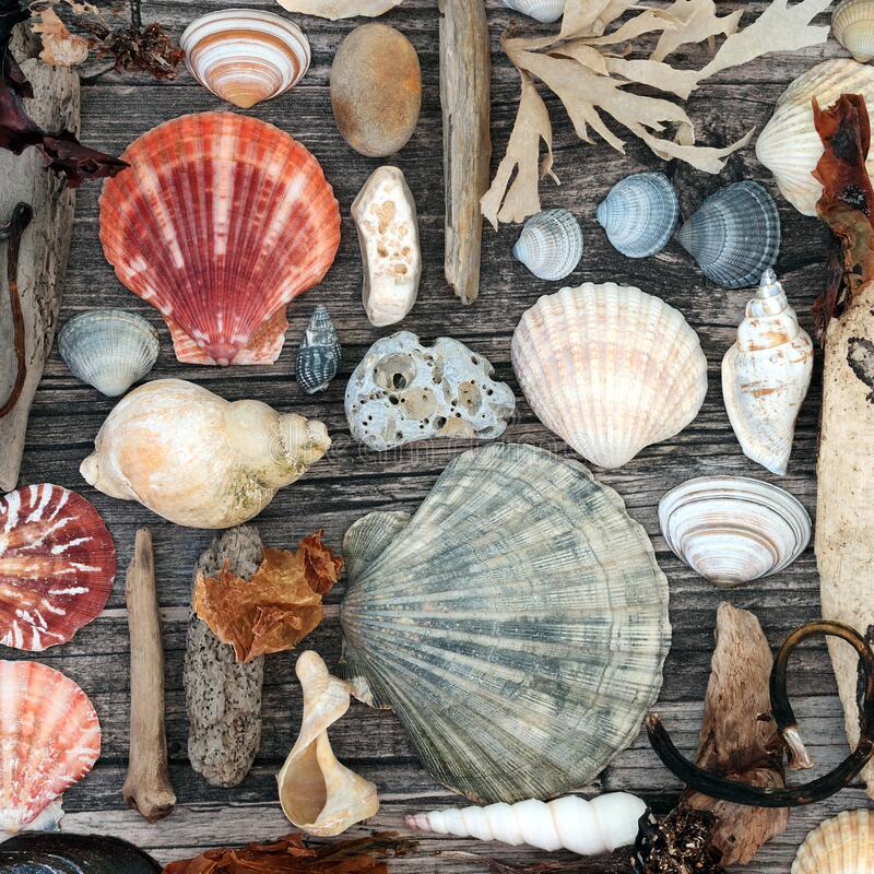 Seashell and Driftwood Abstract on Rustic Wood stock image