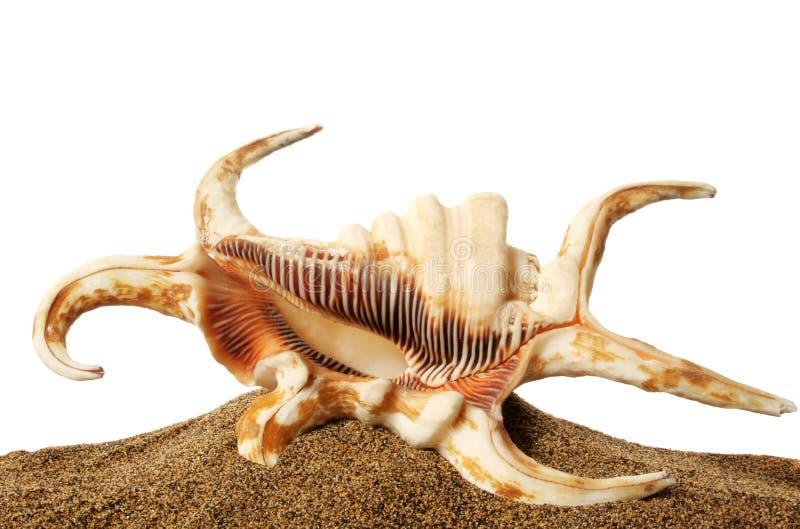 Seashell e areia foto de stock royalty free