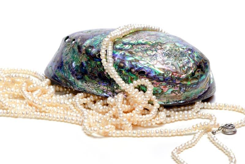Seashell e pérolas do Nacre fotos de stock