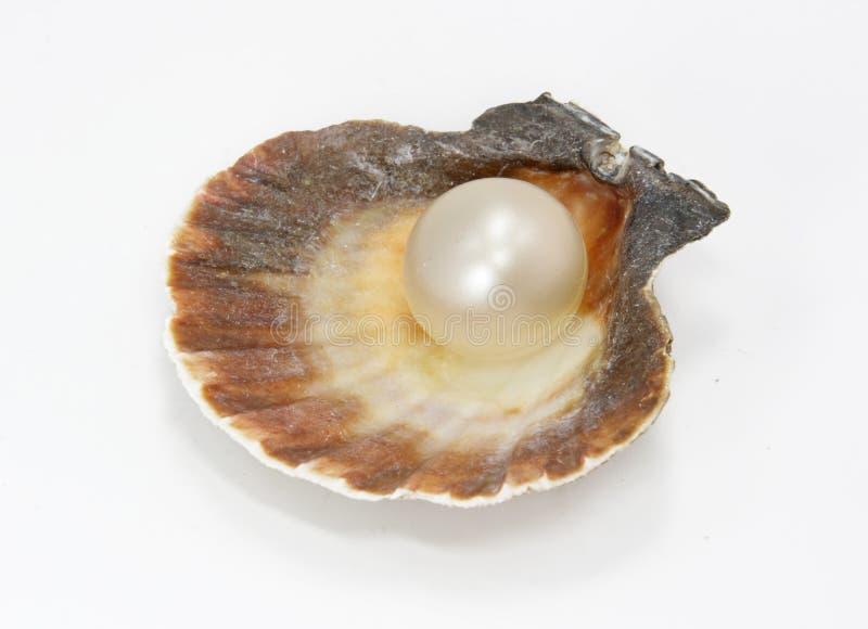 Seashell e perla immagine stock