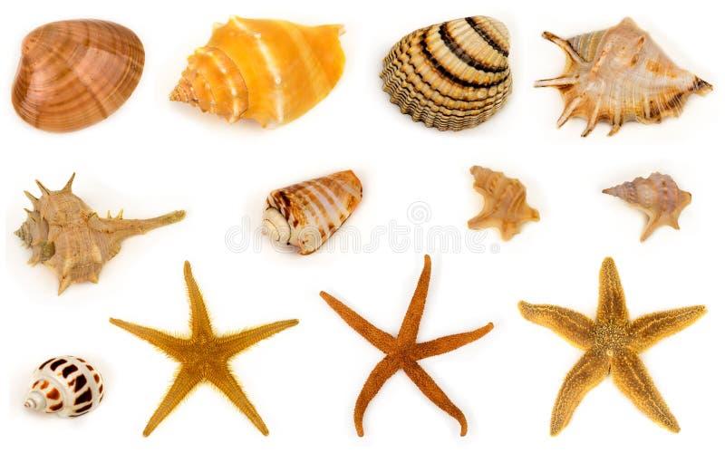 Seashell e stelle marine fotografia stock