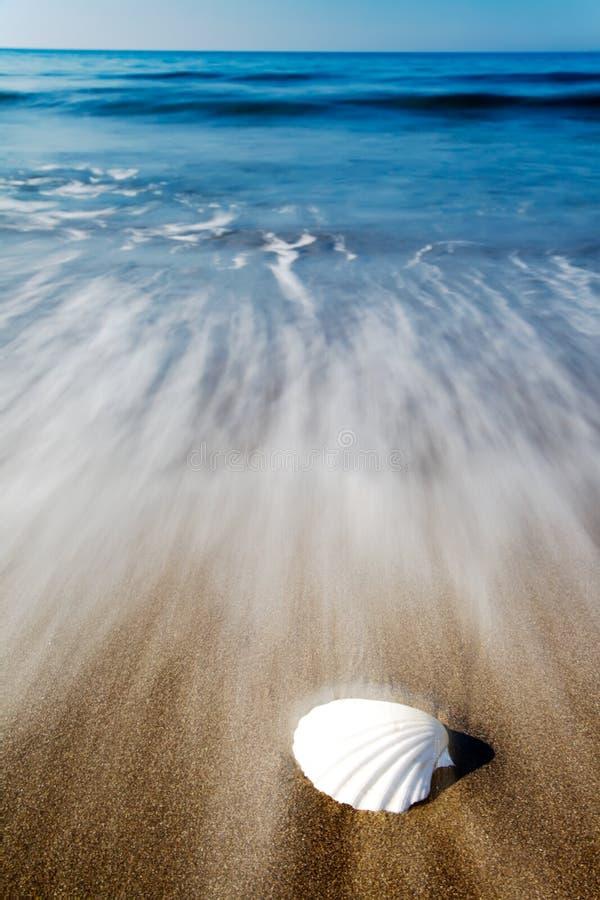 Seashell em uma praia imagem de stock royalty free