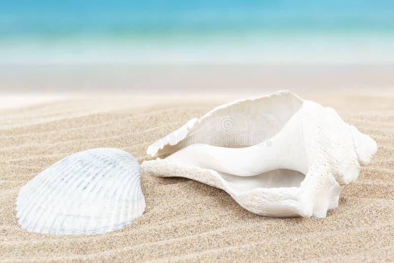 Seashell en arena con el fondo borroso azul imagen de archivo libre de regalías