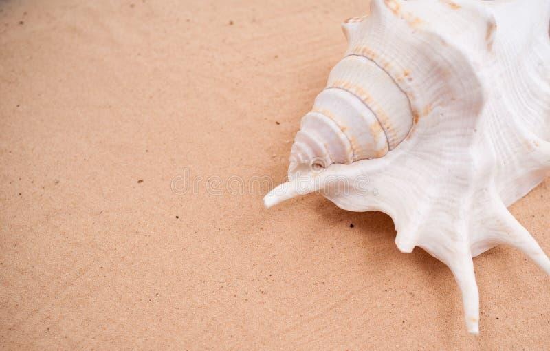 Seashell en la arena imagen de archivo