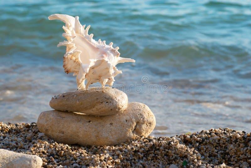 Seashell en la playa foto de archivo