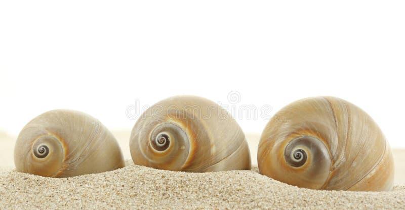 Seashell en la playa de la arena fotografía de archivo libre de regalías