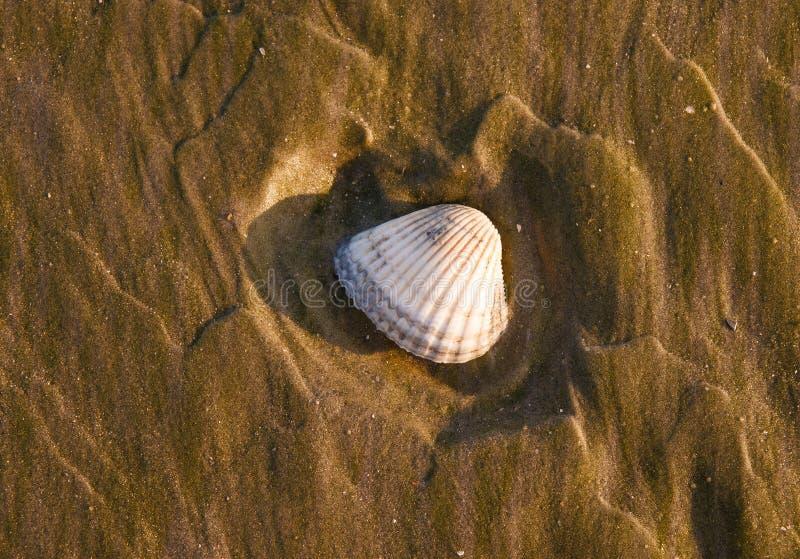 Seashell en la playa de la puesta del sol foto de archivo