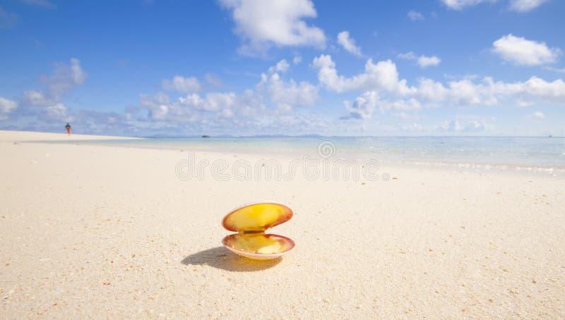 Seashell en la playa tropical imagenes de archivo